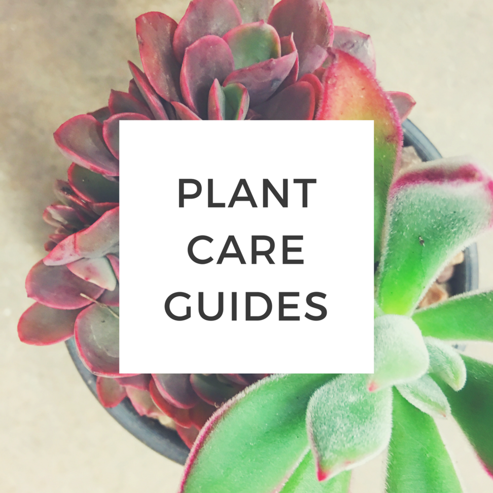 Learn to care for your plants! -