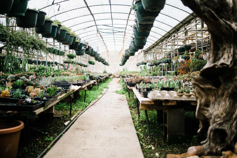 succulent-greenhouse-1