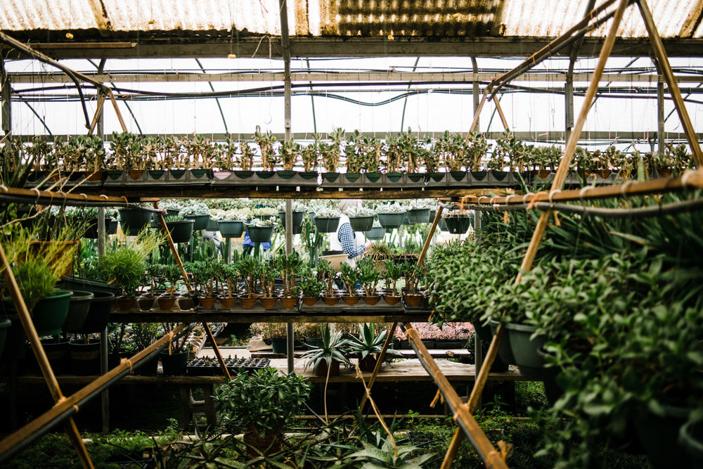 succulent-greenhouse-2