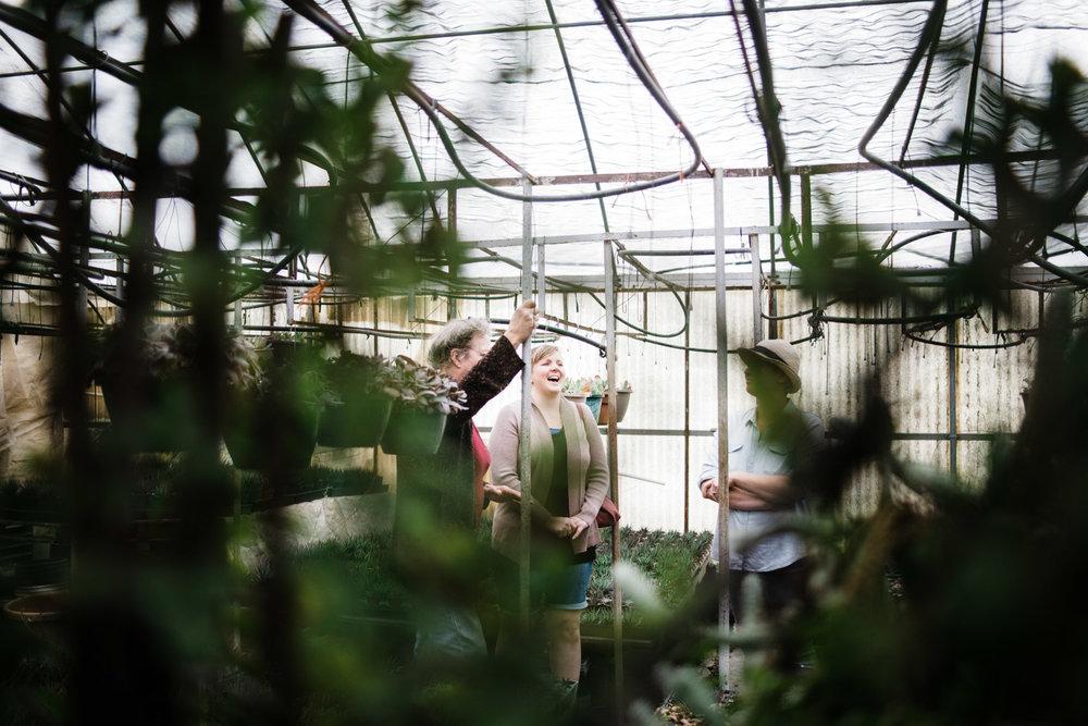 succulent-greenhouse-4
