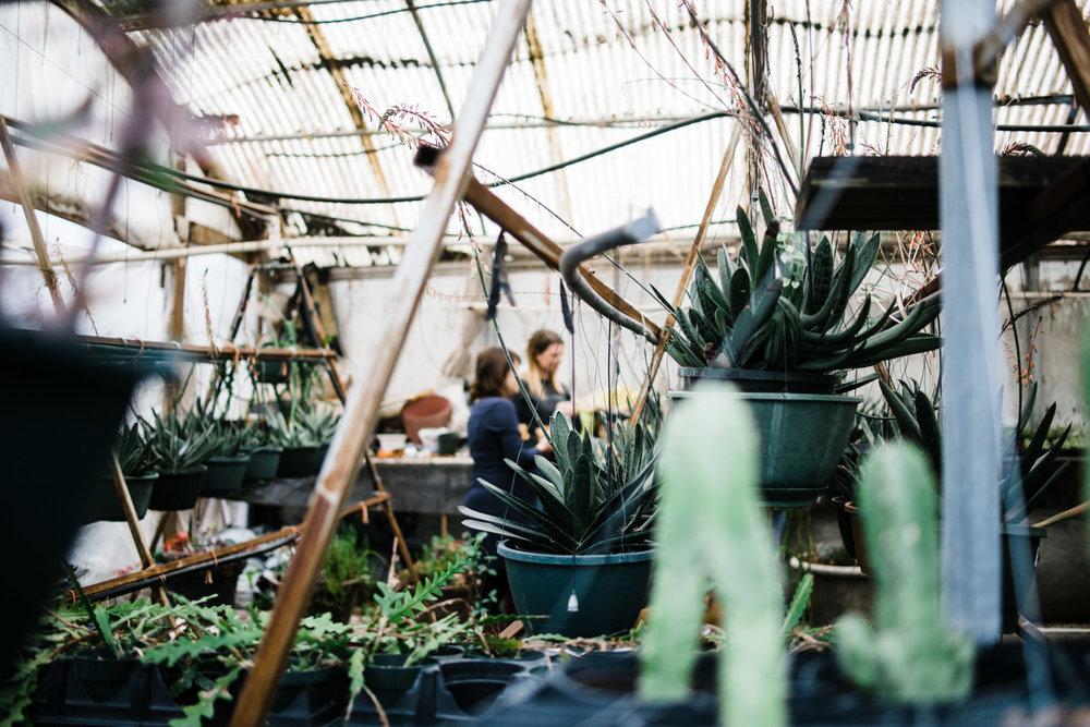succulent-greenhouse-6