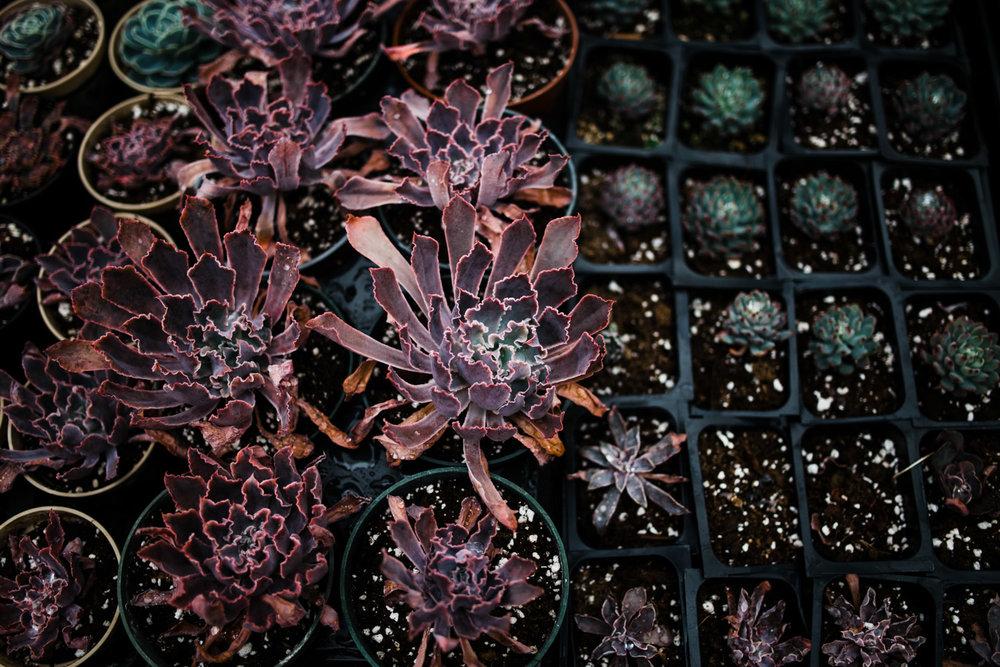 succulent-greenhouse-7