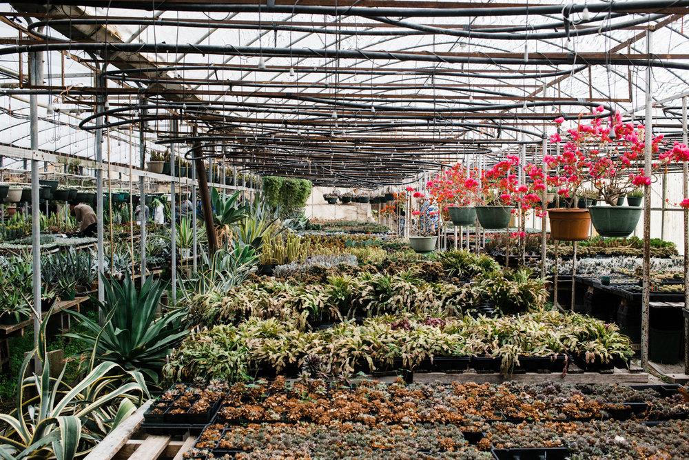 succulent-greenhouse-10