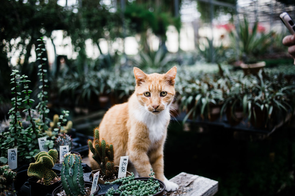 succulent-greenhouse-15
