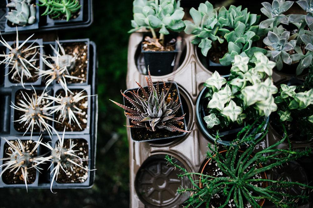 succulent-greenhouse-20