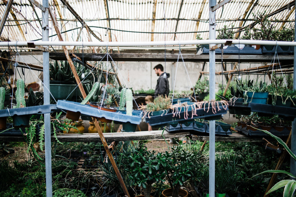succulent-greenhouse-11