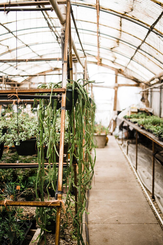 succulent-greenhouse-22