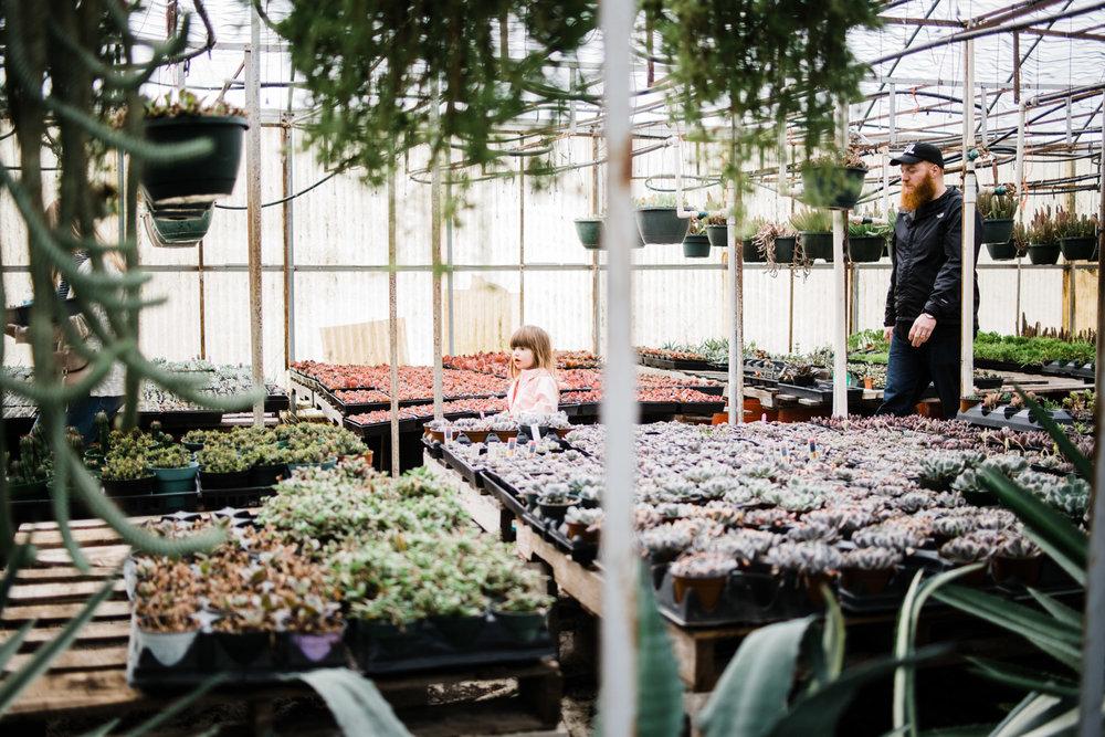 succulent-greenhouse-23