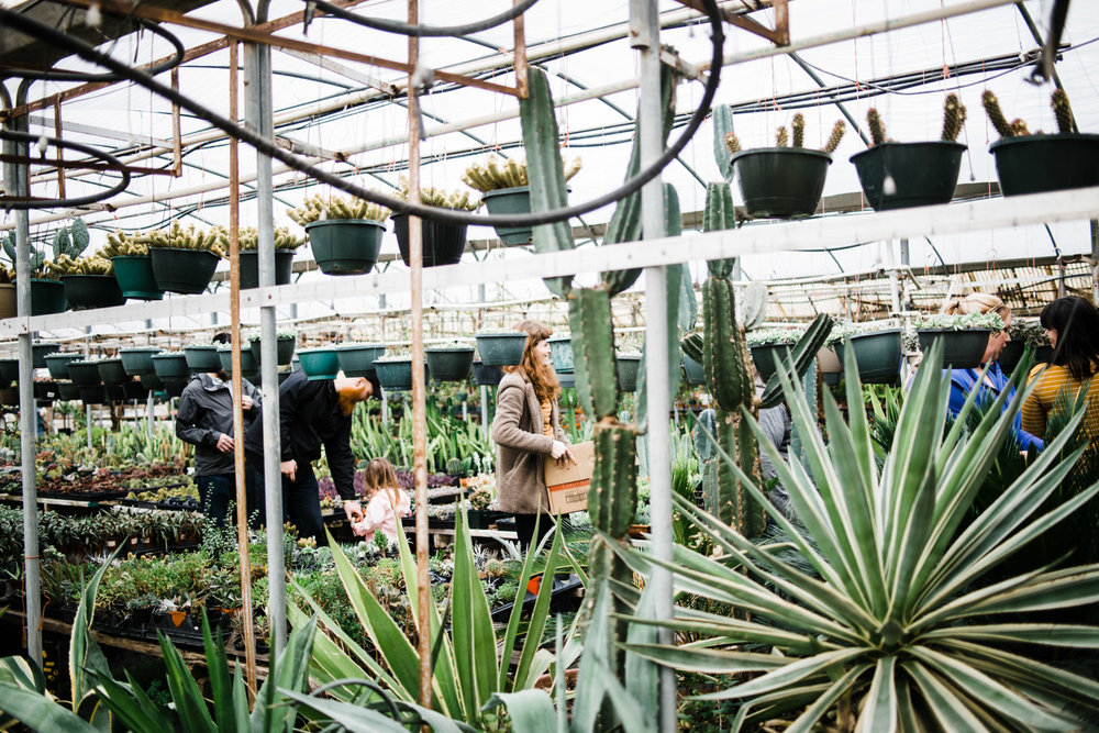 Look at the size of those agaves!