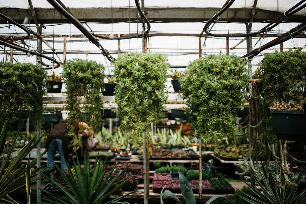succulent-greenhouse-27