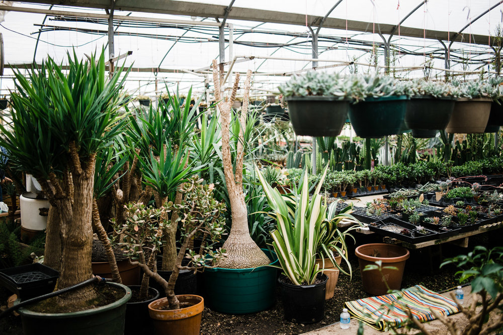 Some of Sara's larger plants are not for sale because they have been given to her by loved ones over the years.