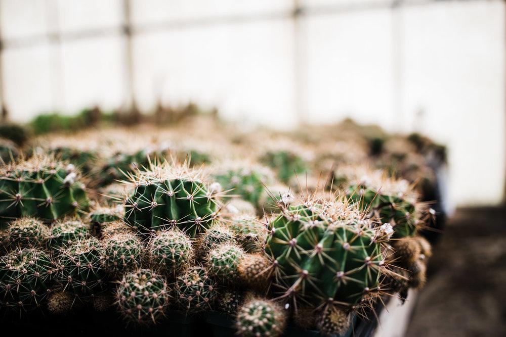 succulent-greenhouse-35