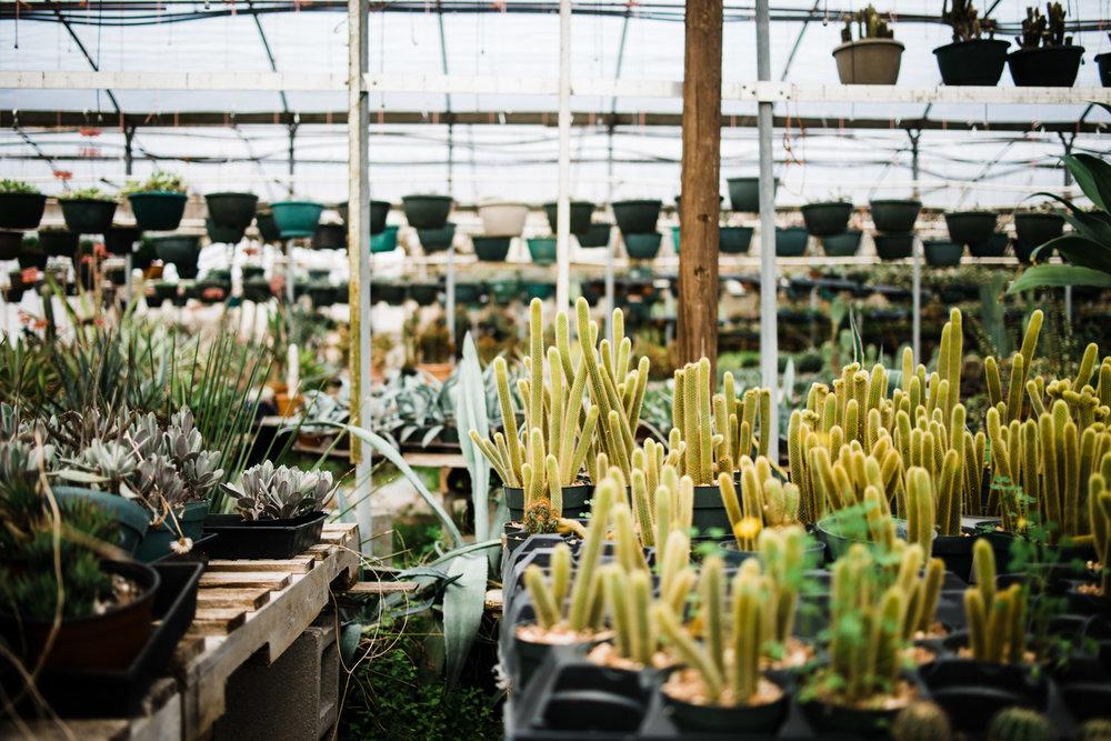 succulent-greenhouse-36