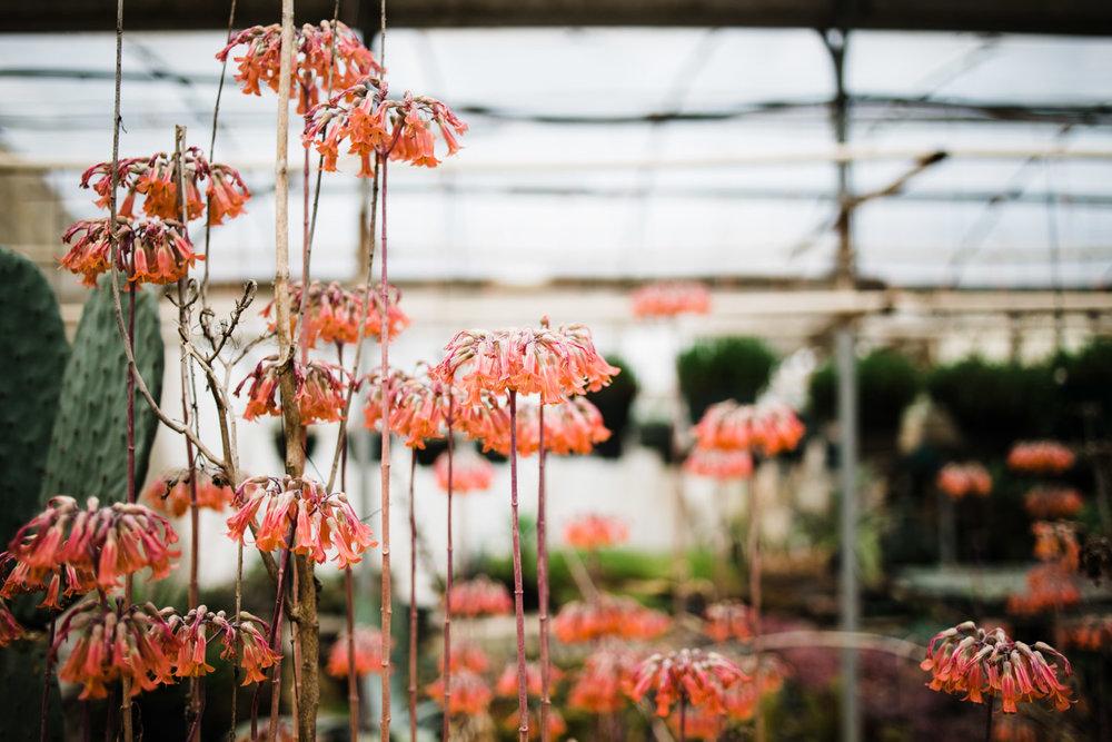 succulent-greenhouse-38