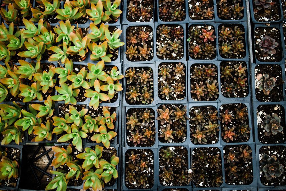 succulent-greenhouse-39