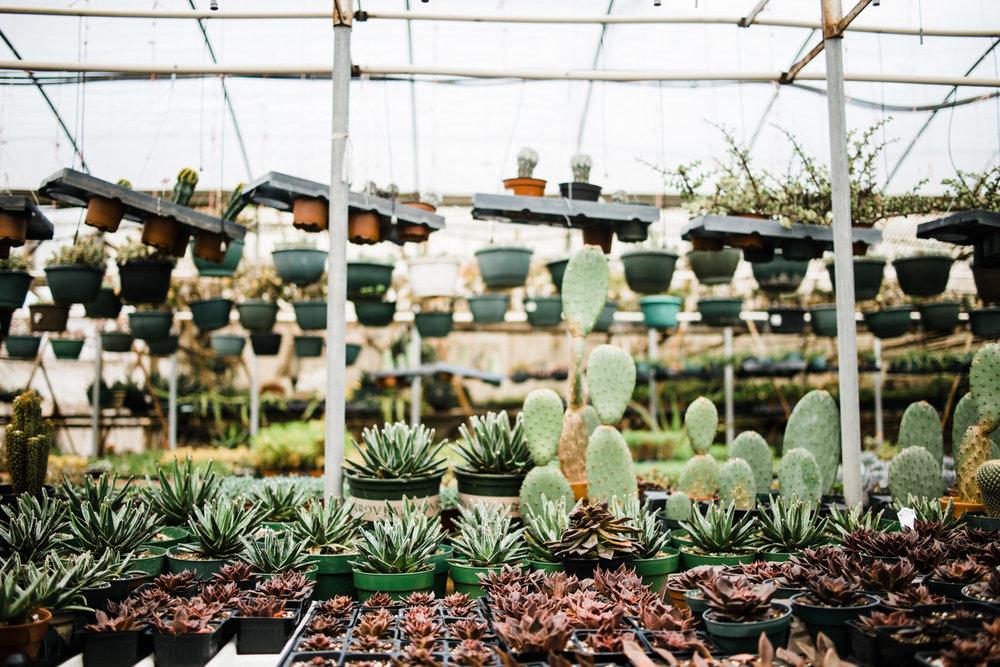 succulent-greenhouse-40