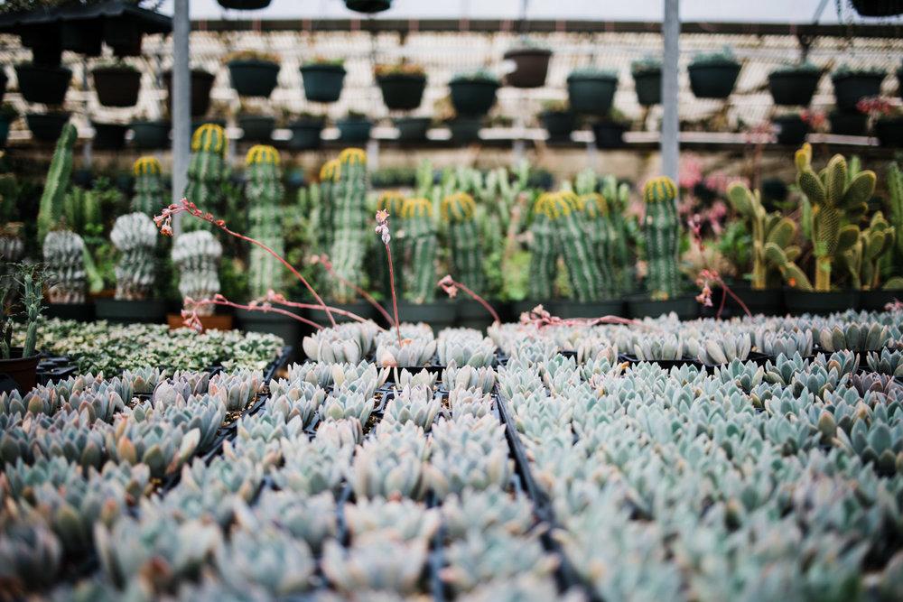 succulent-greenhouse-41