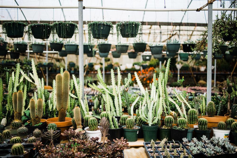 succulent-greenhouse-42