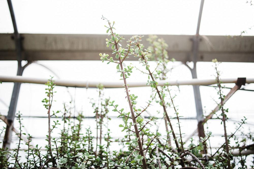 succulent-greenhouse-43