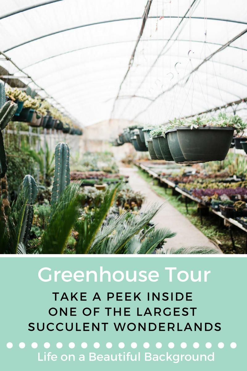 greenhouse tour_ succulent wonderland.png