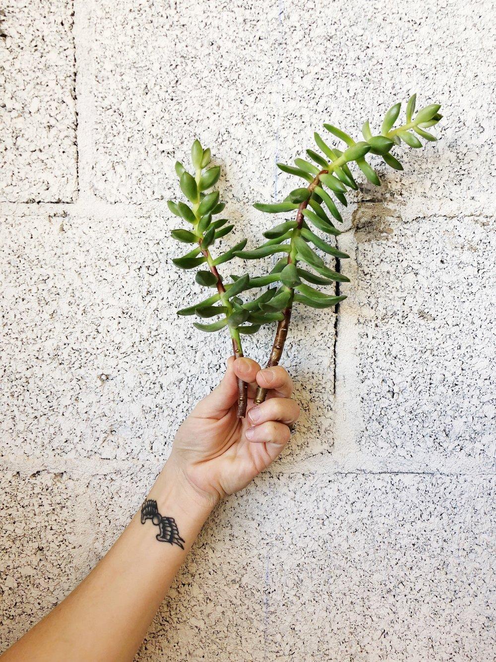 long-term-succulent-care.JPG