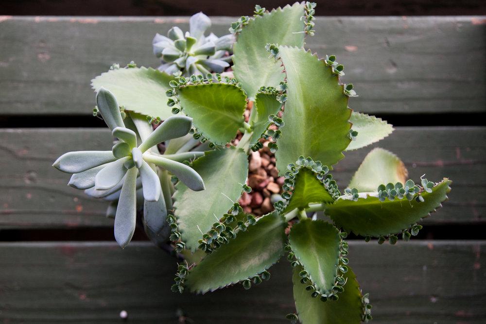 Succulent_calendar-8.jpg