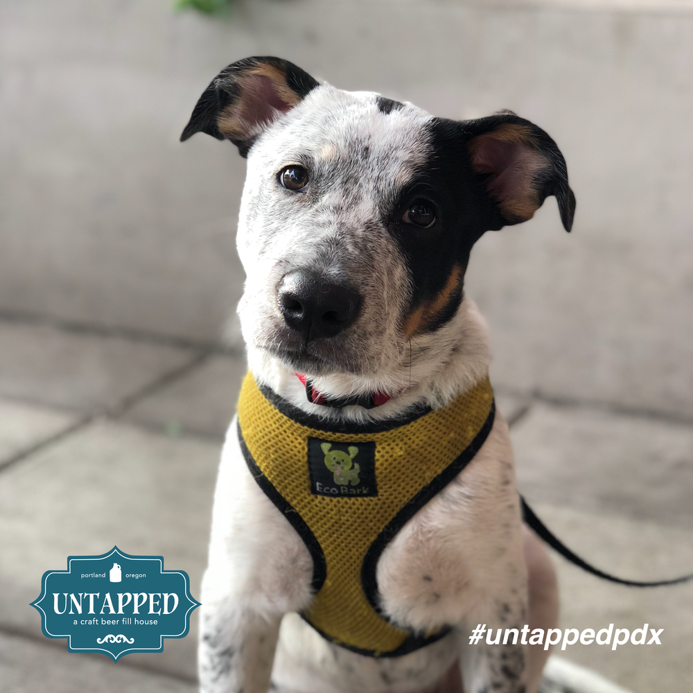 untapped_paws_on_patio_set1-02.png