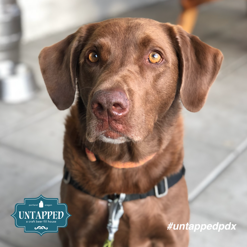 untapped_paws_on_patio_set1-09.png