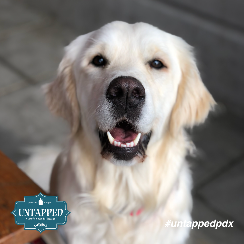 untapped_paws_on_patio_set2-02.png