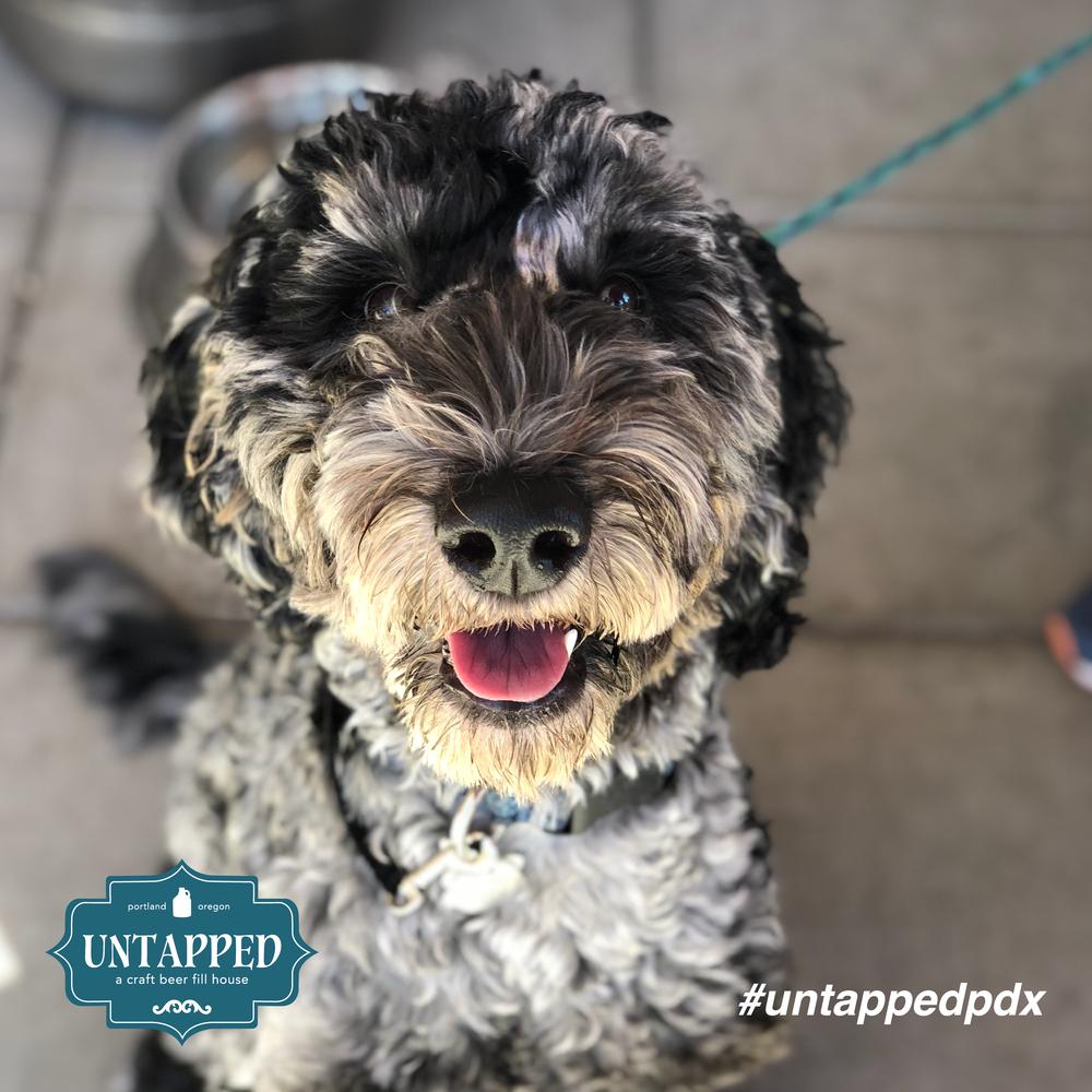 untapped_paws_on_patio_set4-02.png