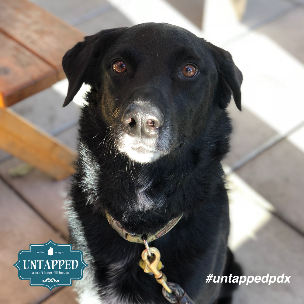 untapped_paws_on_patio_set5-07.png