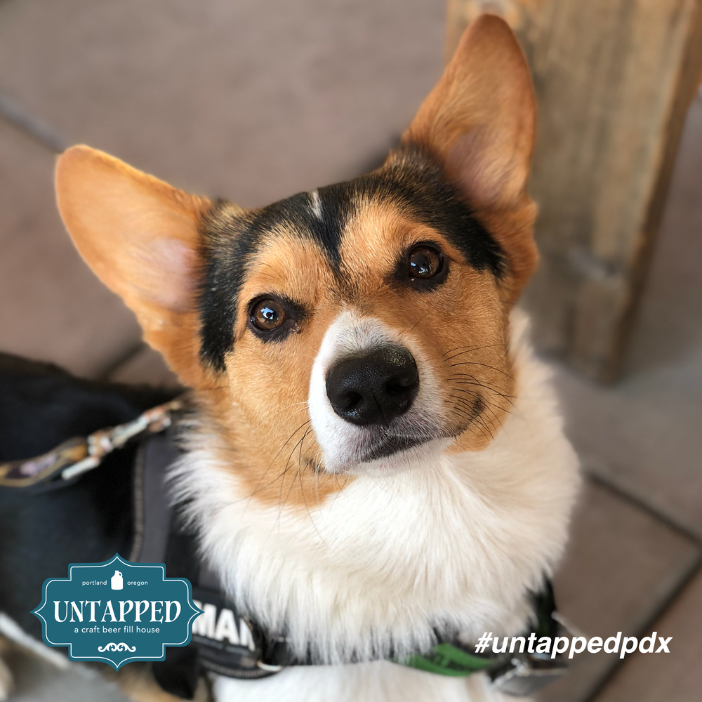 untapped_paws_on_patio-06.png