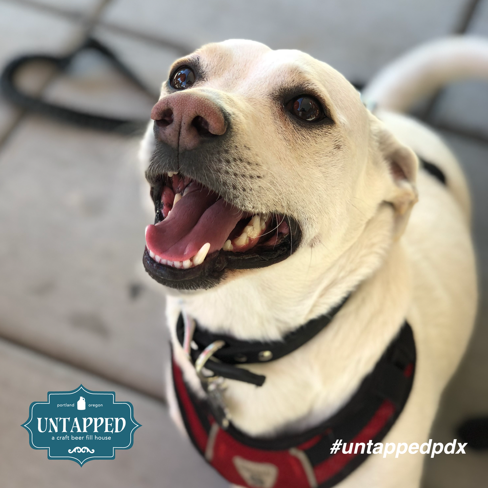 untapped_paws_on_patio_set7-04.png