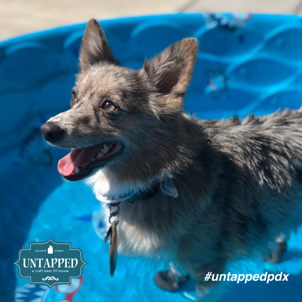 untapped_paws_on_patio_set7-03.png