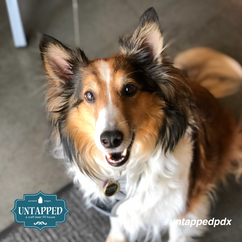 untapped_paws_on_patio_set7-02.png