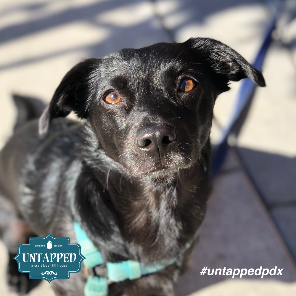 untapped_paws_on_patio_september-06.png