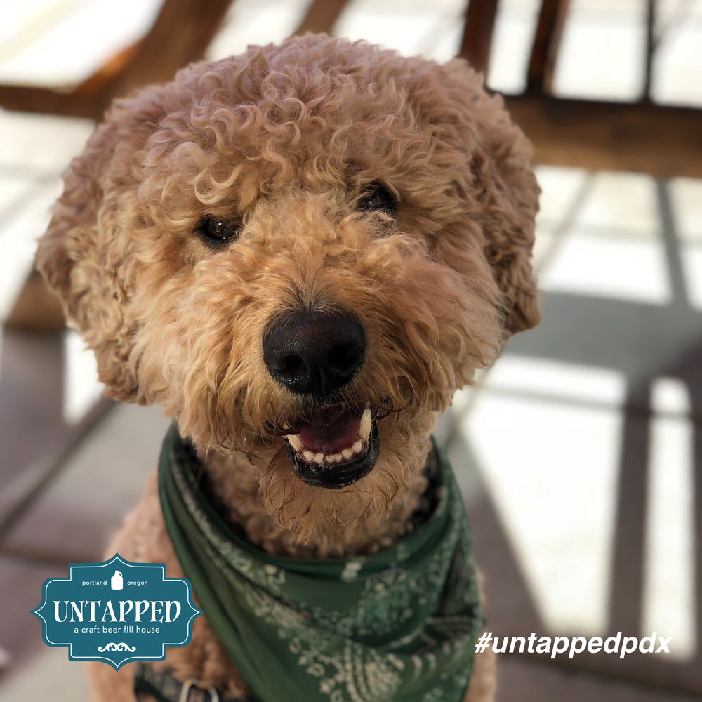 untapped_paws_on_patio_september-07.png