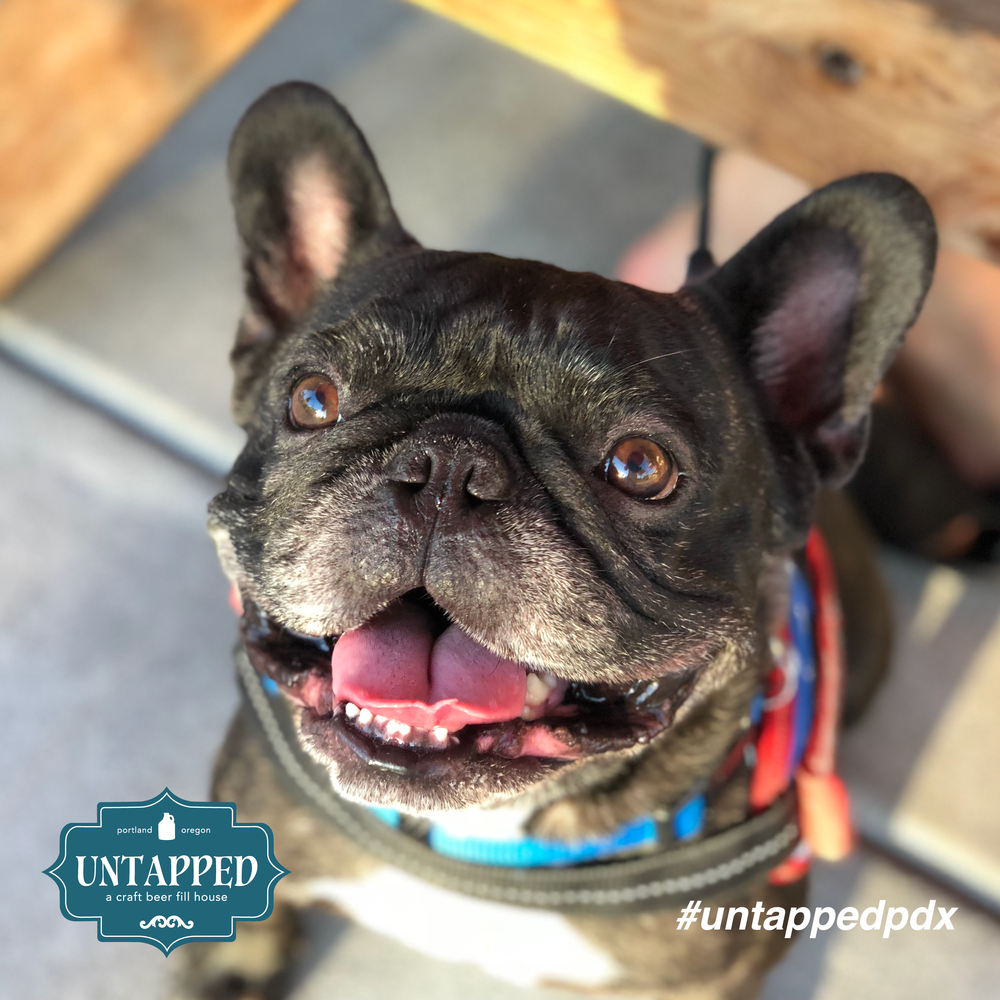 untapped_paws_on_patio_september-05.png
