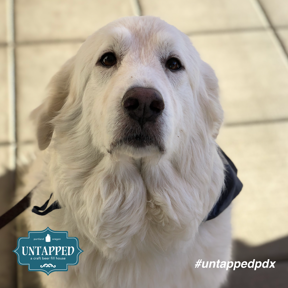 untapped_paws_on_patio_september-02.png