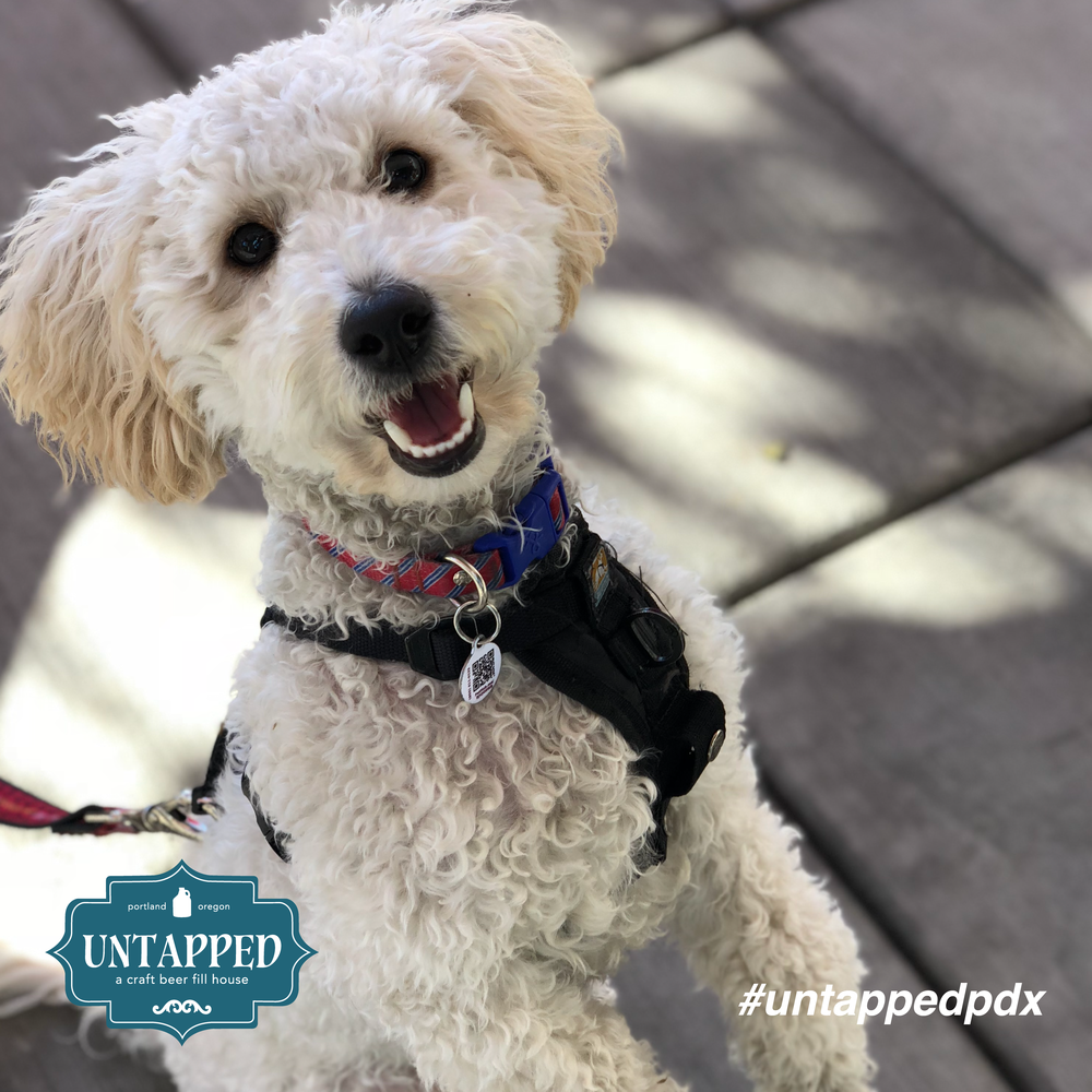 untapped_paws_on_patio_september-08.png