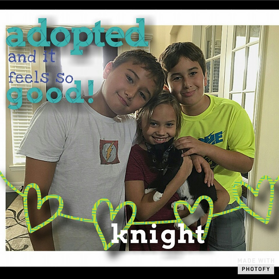 Knight adopted.JPG