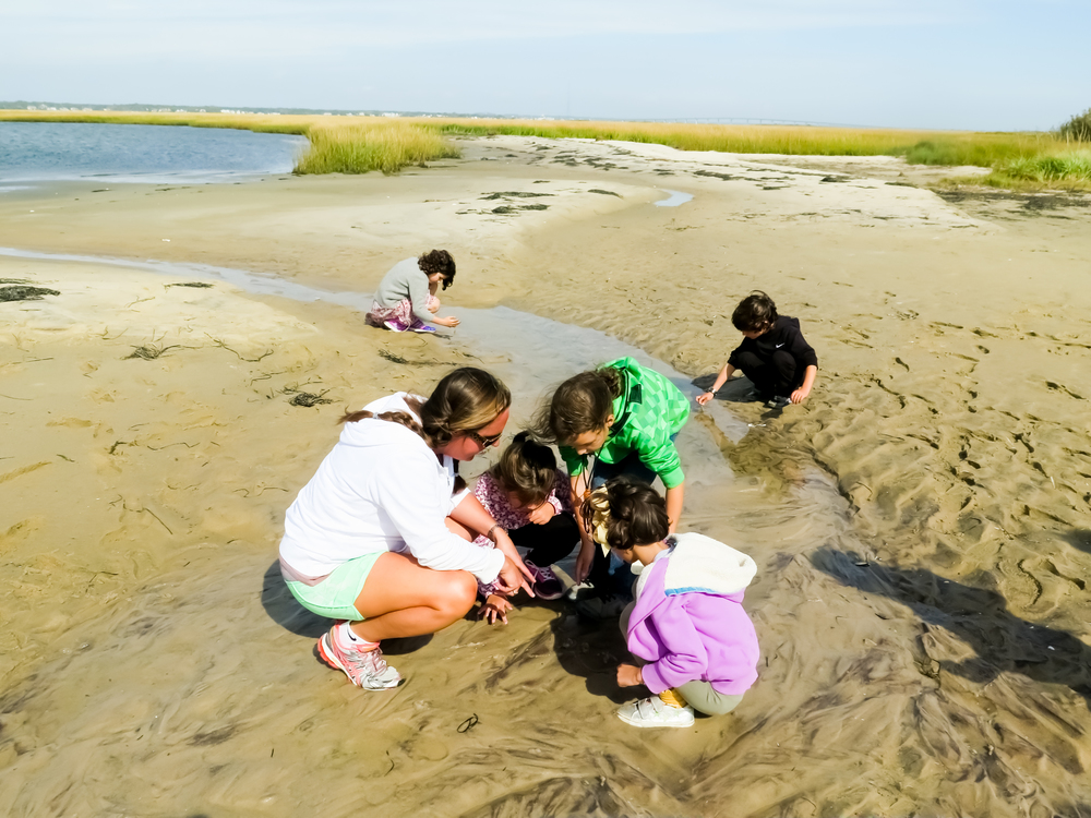 Students observing juvenal horseshoe crabs in a tide pool during a Saltmarsh ecology class Tiana Bay