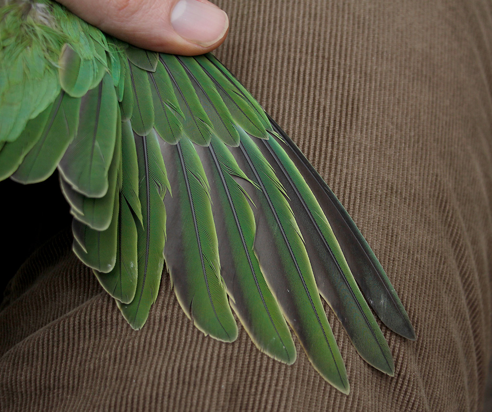 The apparent difference in shape between P5, 6, and 7 is just an effect caused by the placement of the feathers in the photograph.