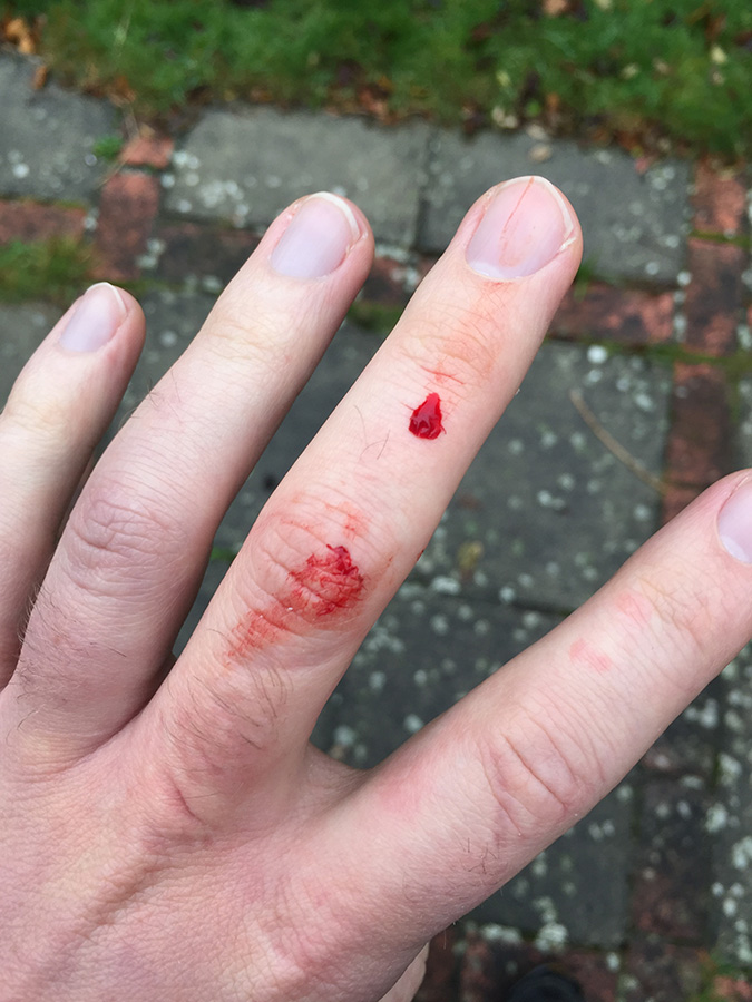 No parakeets were harmed during this morning's ringing session. In fact, I go the feeling it rather enjoyed taking chunks out of my finger...