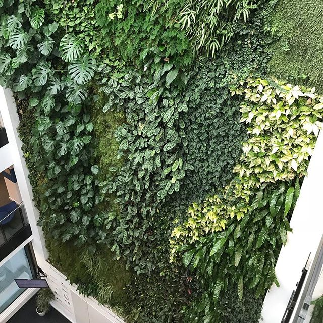 Working from the #BTO office in the Cambridge Conservation Initiative #DavidAttenborough building today. Here's their #livingwall above the reception.