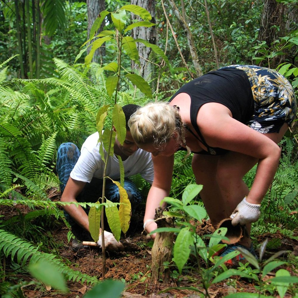 JUNGLE REPLANTATION -