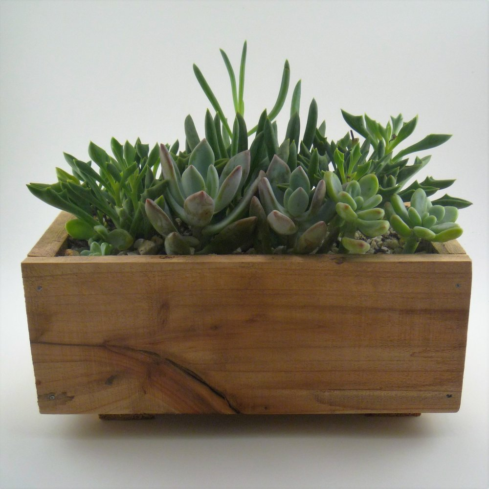 In this hands-on workshop participants  will create a beautiful miniature garden in a handmade aromatic  cedar box.                                           · $40 per participant · Four person minimum                · All plants, planters & other materials provided