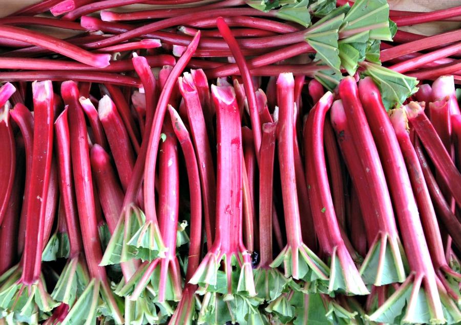 Rhubarb | Lauretta Jean's