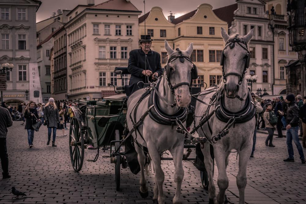 Czech Horses W.jpg