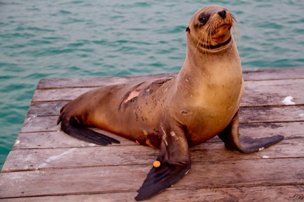 Galapagos-63.jpg
